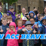 ACC Beavers – Looking for a new role?